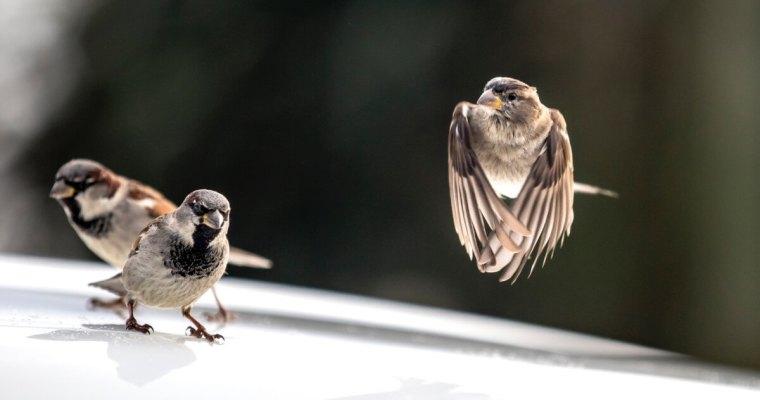 What Are The Best Birdbaths?