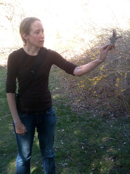 Master Bird Conservation Program a big success   BirdCallsRadio     Corrie Folsom O Keefe of Audubon Connecticut holds a white throated sparrow  during