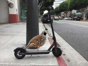 bird charging
