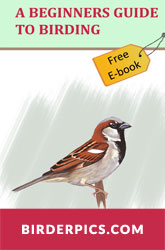 Free Ebook: A beginner's guide to birding