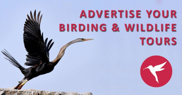 Advertise your birding & wildlife tours