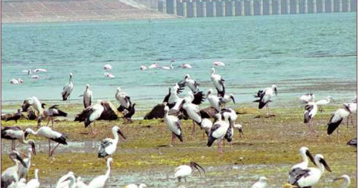 Jayakwadi-Bird-Sanctuary