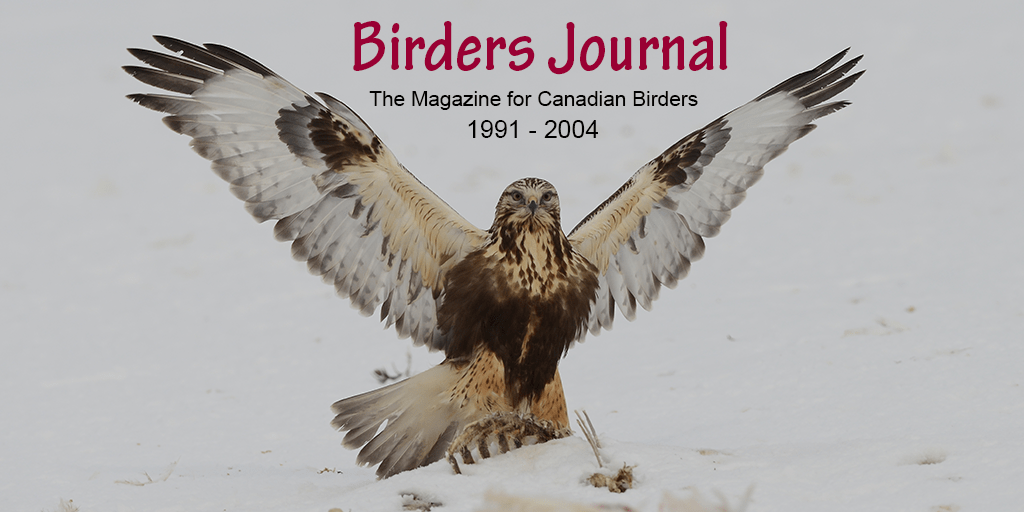 bird watcher articles