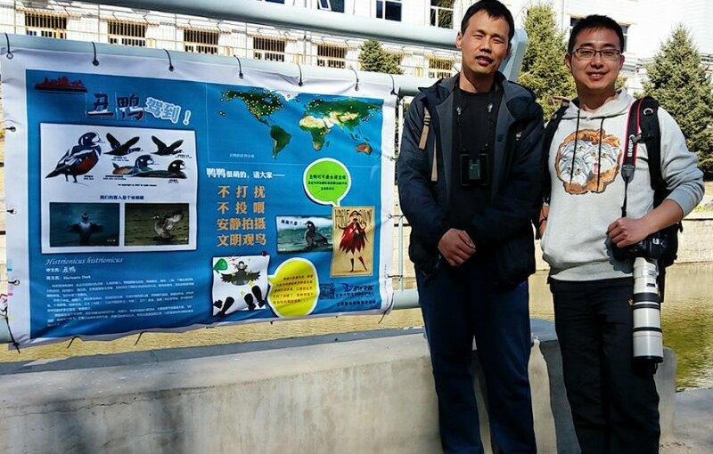 Volunteers Protect Beijing's Harlequin Duck