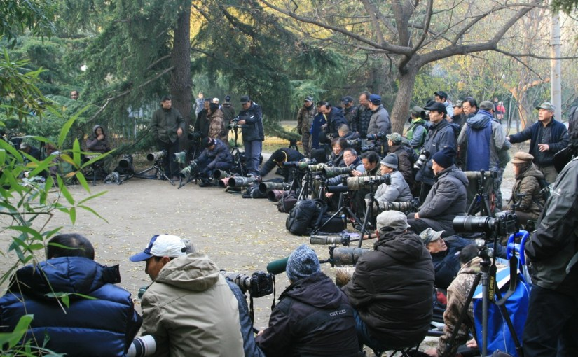 Code of Conduct for Chinese Bird Photographers