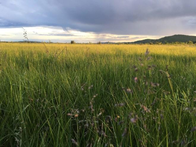 2018-06-18 Meadow in Inner Mongolia