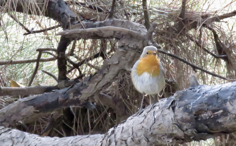 Rare and Scarce Birds in Beijing 2019