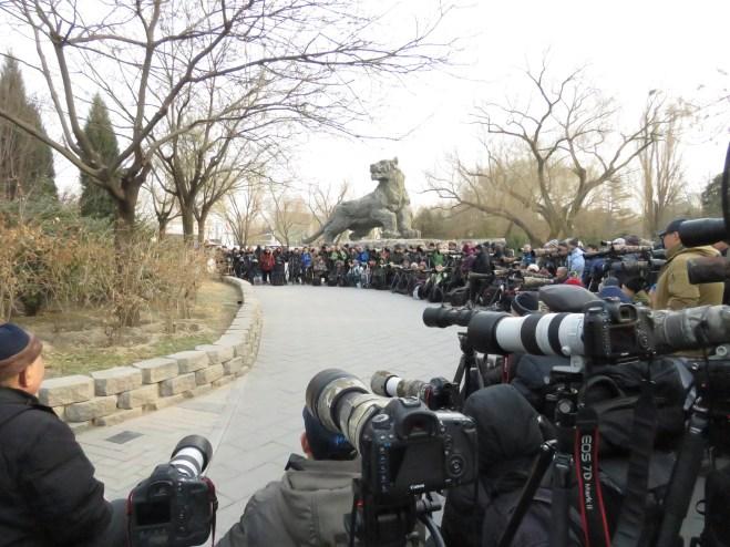 2019-01-11 Robin twitch, Beijing Zoo 1