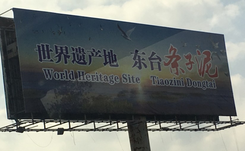 Yancheng planning to become a world-leader on coastal wetland conservation