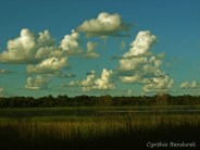 02 Birdingmurcia - Cynthia Bandurek - landscape