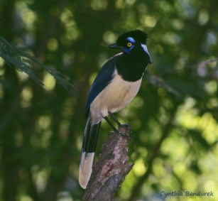 19 Birdingmurcia - Cynthia Bandurek