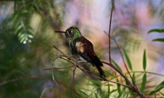 28 Birdingmurcia - Cynthia Bandurek