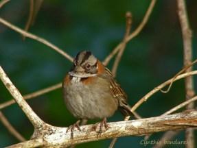 29 Birdingmurcia - Cynthia Bandurek