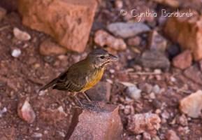 39 Birdingmurcia - Cynthia Bandurek