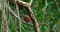 43 Birdingmurcia - Cynthia Bandurek