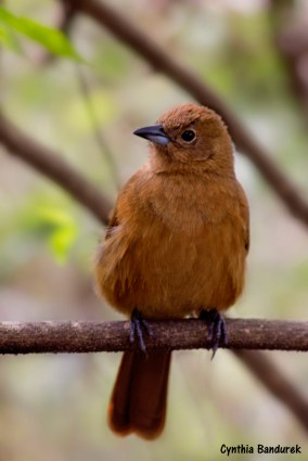 46 Birdingmurcia - Cynthia Bandurek