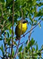49 Birdingmurcia - Cynthia Bandurek