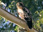 40 BIRDERS Santy Carrasco