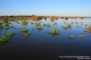 06 BIRDERS H Tolosa-Laguna Las Perdices