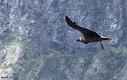 13 Birdingmurcia - Marcelo Cruz