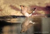 15 BIRDINGMURCIA - Biovisual - canastera