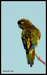 37 Birdingmurcia - Marcelo Cruz
