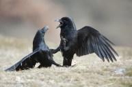 20 Birdingmurcia - Kique Ruiz