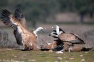 21 Birdingmurcia - Kique Ruiz