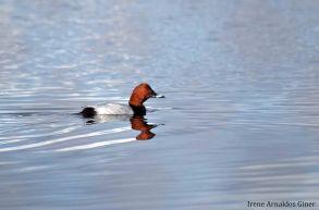 10 I. Arnaldos-birdingmurcia
