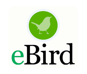 eBird application