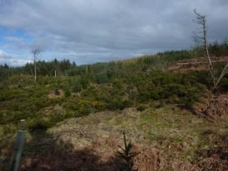 Pine Marten habitat?