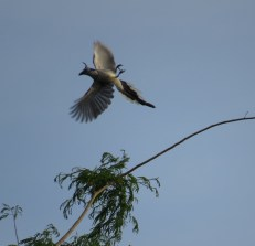 I seem to have a knack for catching birds right after takeoff. Now I just need a camera with a faster shutter speed!