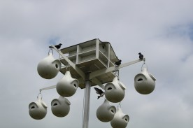 Purple Martin houses (Image by BirdNation)