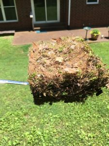 tufted titmouse nesting material 2