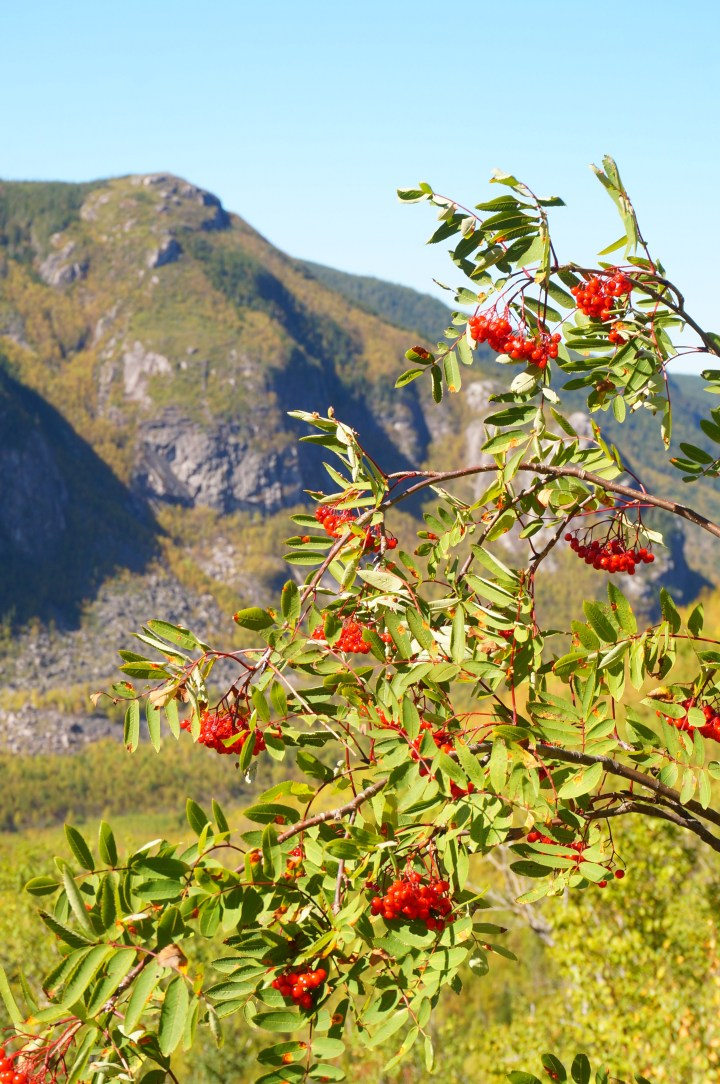 sentier-mont-lac-cygnes-grands-jardins