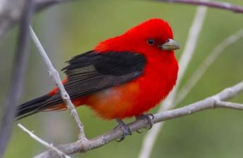 Point Pelee Bird Photography