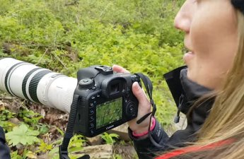 3 Warbler Photography Tips
