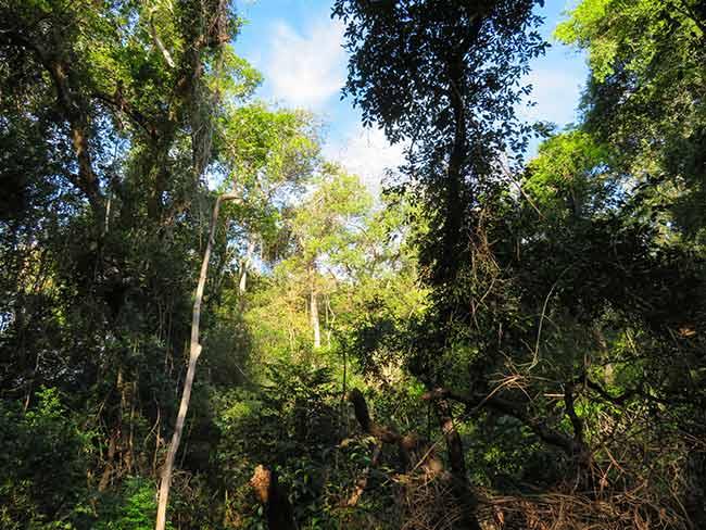 Costa Rica birding tour review