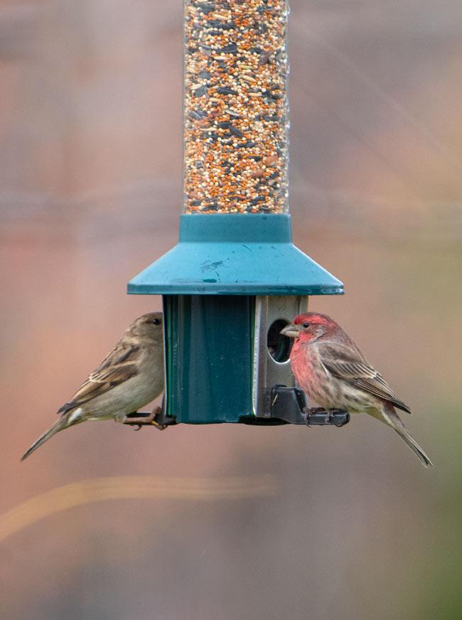 backyard bird feeder review