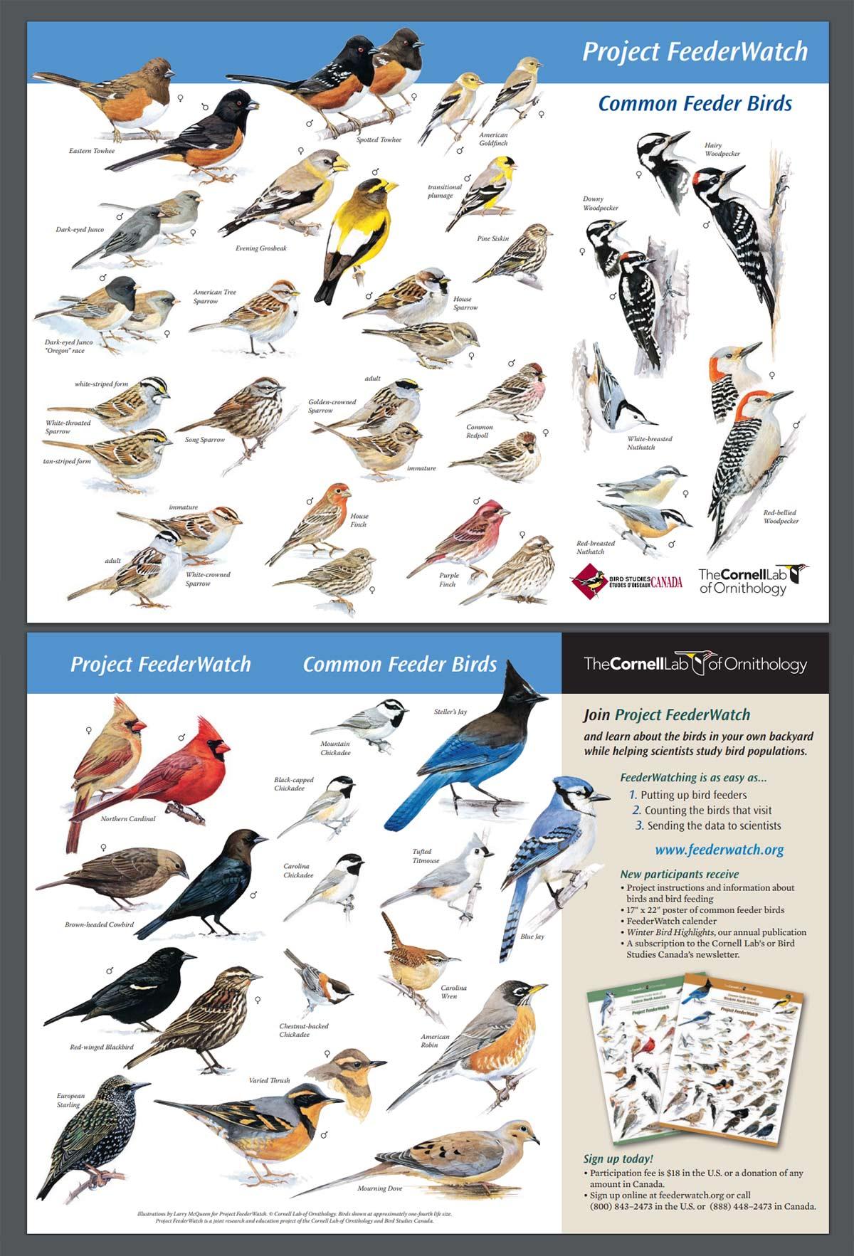 8 Easy Ways to Identify Backyard Birds - Bird Photography Life