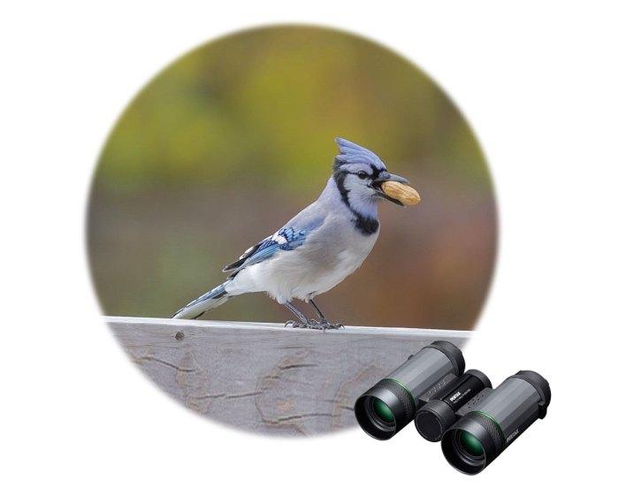 bird-watching binoculars