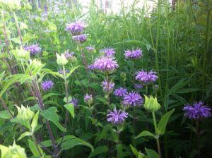 Bird and Pollinator Garden