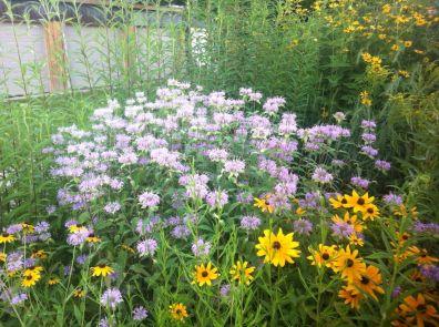 Our Wildflower Garden