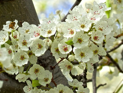 Blossoms close up