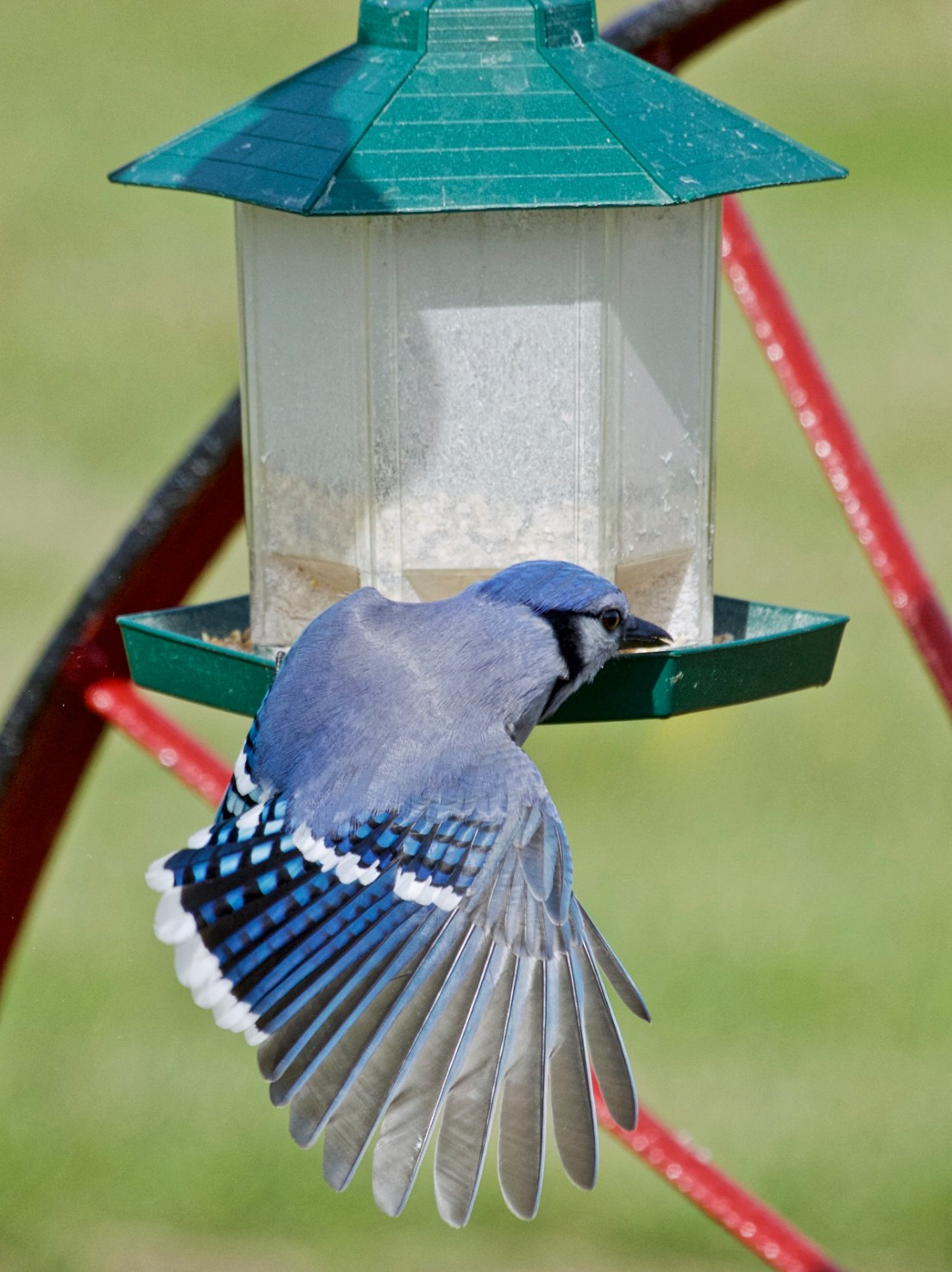 We saw tons of Blue Jays back east, but these were the only closeups I have to share....