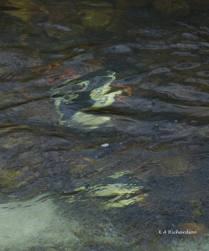 COGOs make underwater art!