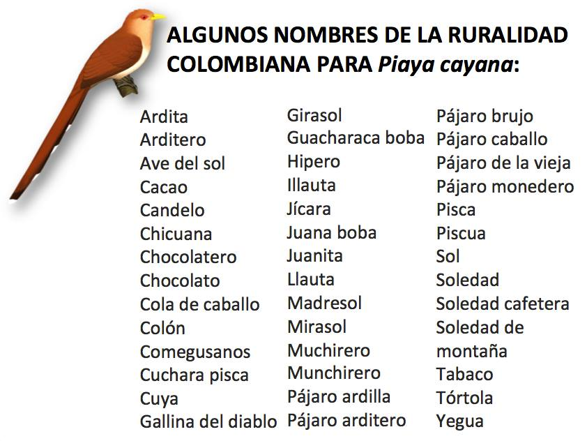 Piaya cayana Nombres colombia