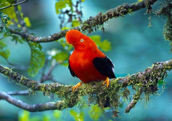 اجمل طائر في العالم