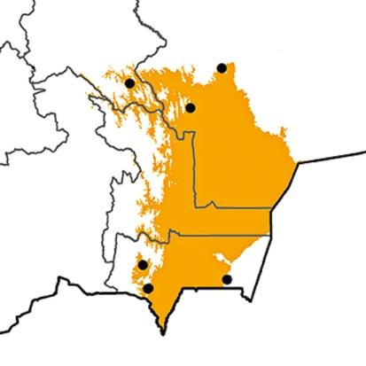 Cypseloides rothschildi