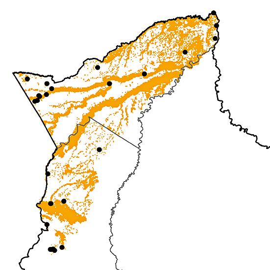 Galbula cyanescens